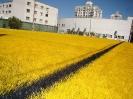 Nova quadra amarela